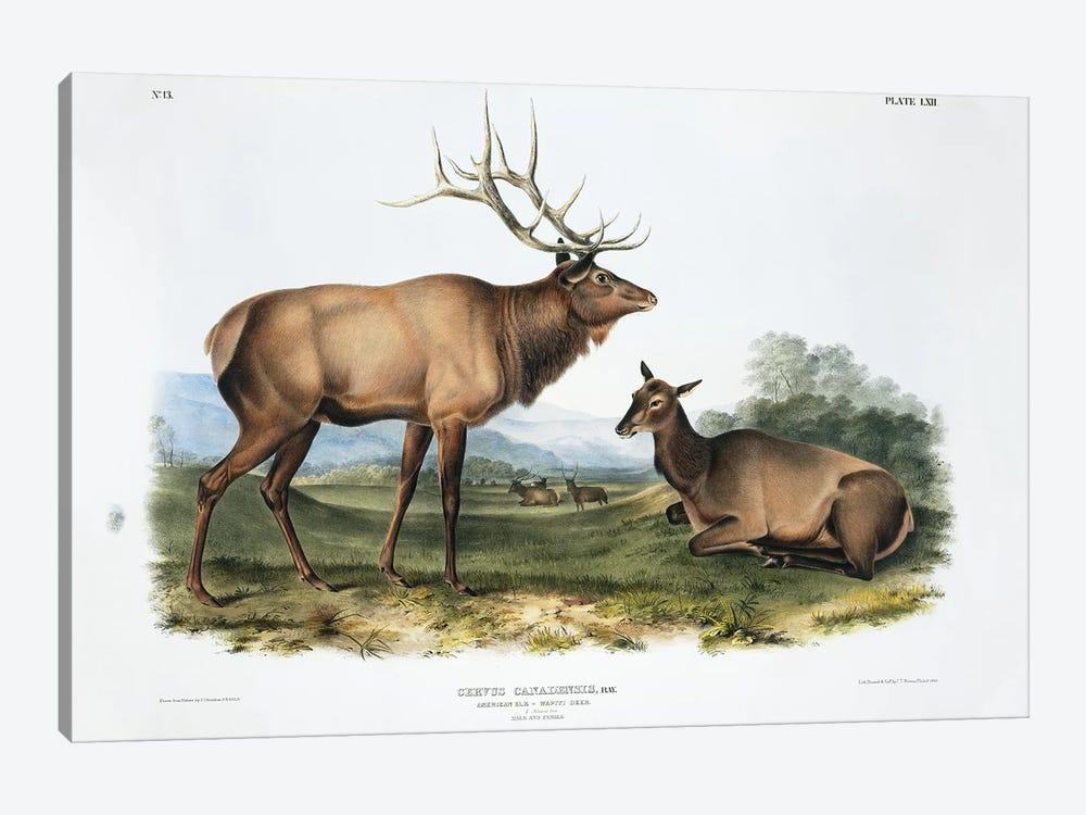 Cervus Canadensis (American Elk or Wapiti), Plate LXII, The Viviparous Quadrupeds Of North America (Vol. II) by John James Audubon 1-piece Canvas Wall Art
