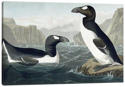 Great Auk, 1836  Canvas Art Print