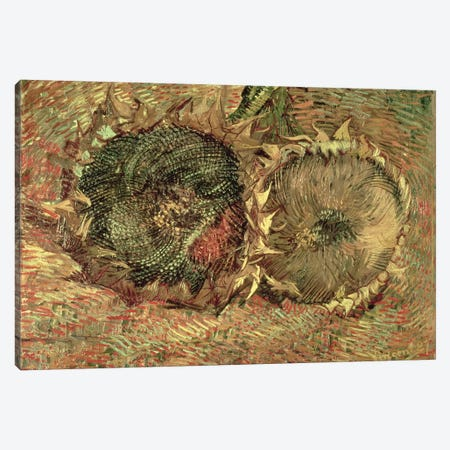 Two Cut Sunflowers, 1887  Canvas Print #BMN1075} by Vincent van Gogh Canvas Artwork
