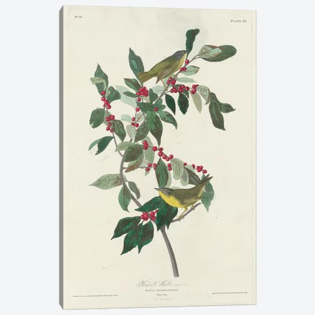 Nashville Warbler, 1830  Canvas Print #BMN10762} by John James Audubon Canvas Art
