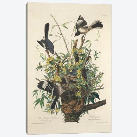 The Mocking Bird, 1827  Canvas Print #BMN10779} by John James Audubon Art Print
