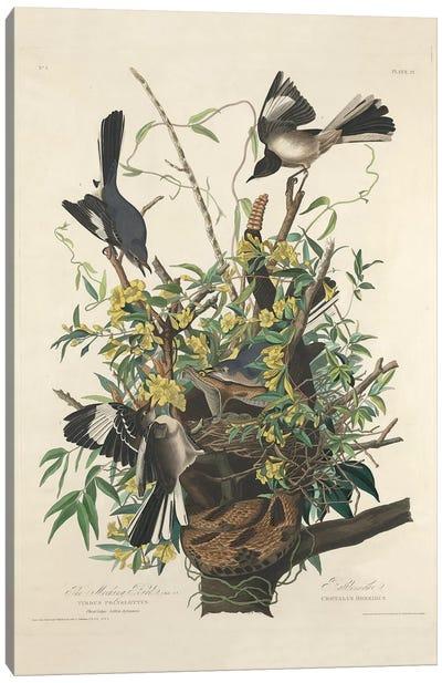 The Mocking Bird, 1827  Canvas Art Print