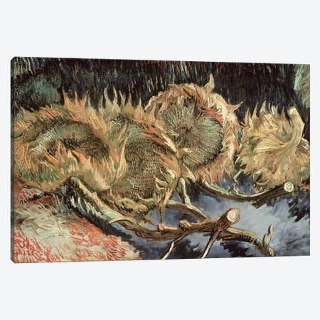 Four Withered Sunflowers, 1887  Canvas Print #BMN1077} by Vincent van Gogh Canvas Artwork