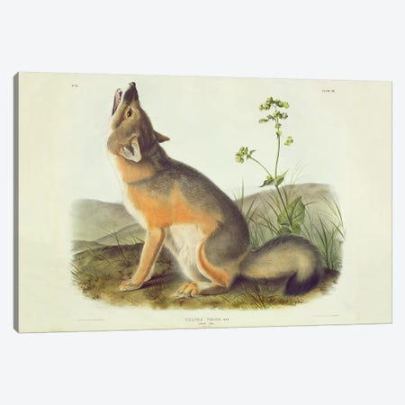 Vulpes Velox , plate 52 from 'Quadrupeds of North America', engraved by John T. Bowen , 1844  Canvas Print #BMN10782} by John James Audubon Canvas Art