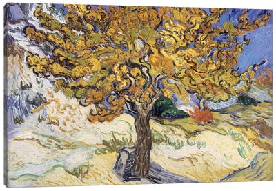 Mulberry Tree, 1889  Canvas Art Print