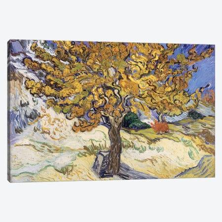 Mulberry Tree, 1889  Canvas Print #BMN1080} by Vincent van Gogh Canvas Art