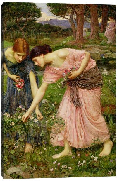 Gather Ye Rosebuds While Ye May', 1909  Canvas Art Print