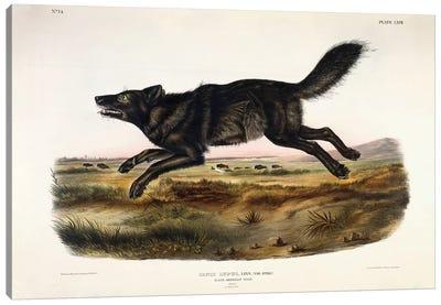 Black American Wolf, Male, 1845  Canvas Art Print