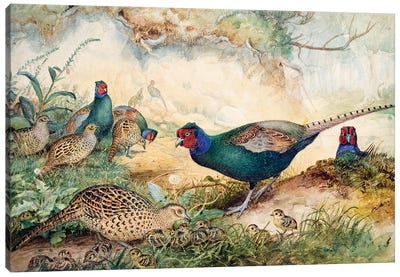 Japanese Pheasants, 1865  Canvas Art Print
