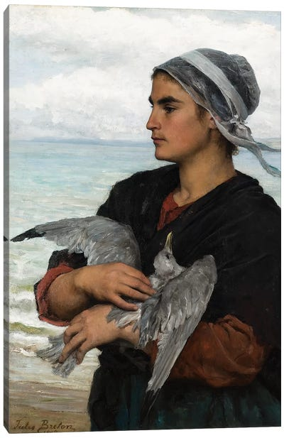 The Wounded Sea Gull, 1878  Canvas Art Print