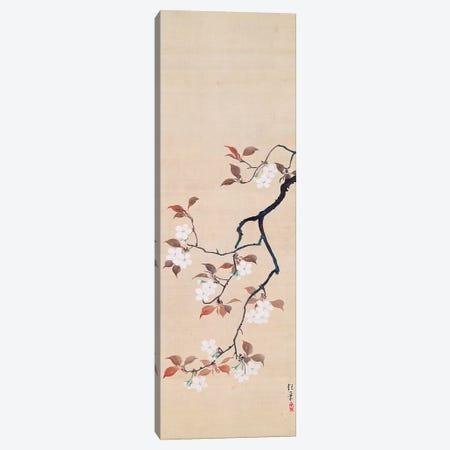 Hanging Scroll Depicting Cherry Blossoms Canvas Print #BMN10998} by Sakai Hoitsu Art Print