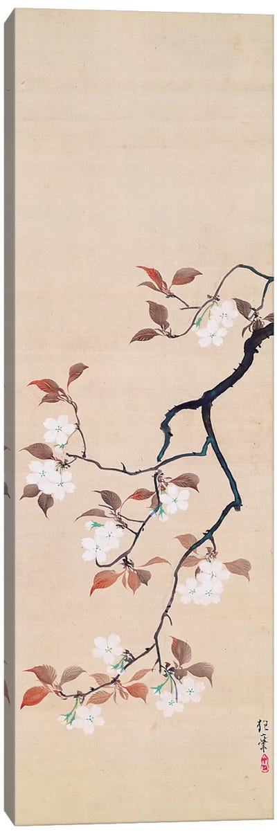 Hanging Scroll Depicting Cherry Blossoms Canvas Art Print