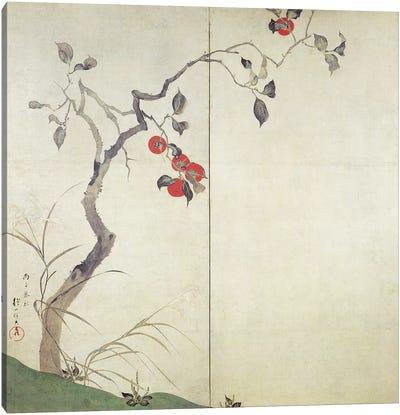 Persimmon on Tree  Canvas Art Print