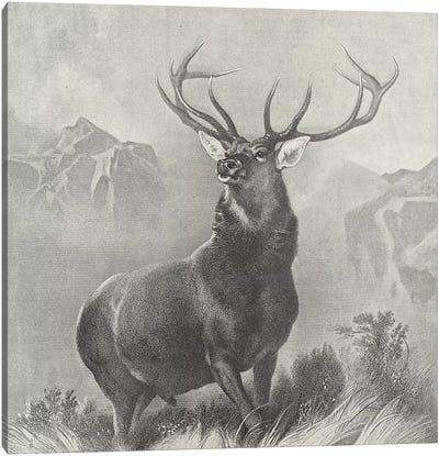 The Monarch of the Glen  Canvas Art Print