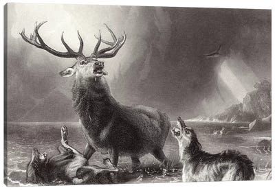 The Stag at Bay  Canvas Art Print