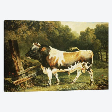 A Bull Of The Alderney Breed Canvas Print #BMN11094} by James Ward Canvas Wall Art