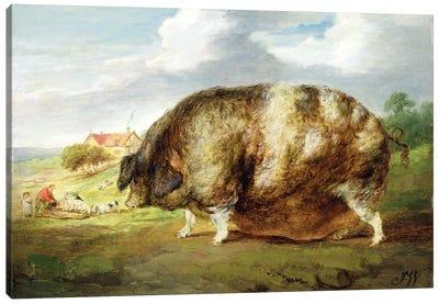 A Gloucestershire Old Spot Canvas Art Print