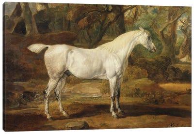 A Grey Arabian Stallion, The Property Of Sir Watkin Williams-Wynn, C.1815-20 Canvas Art Print