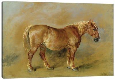 A Suffolk Punch Canvas Art Print