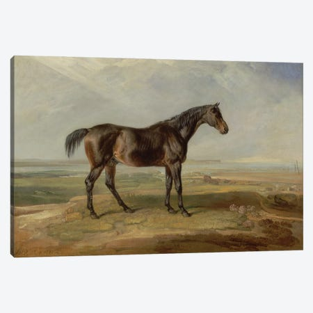 Dr. Syntax, A Bay Racehorse, Standing In A Coastal Landscape, An Estuary Beyond Canvas Print #BMN11117} by James Ward Canvas Print