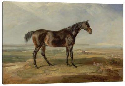 Dr. Syntax, A Bay Racehorse, Standing In A Coastal Landscape, An Estuary Beyond Canvas Art Print