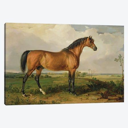 Eagle, A Celebrated Stallion Canvas Print #BMN11118} by James Ward Canvas Artwork