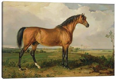 Eagle, A Celebrated Stallion Canvas Art Print
