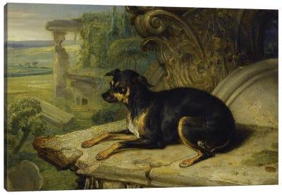 Fanny', A Favourite Dog, 1822 Canvas Art Print