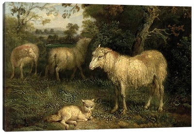 Landscape With Sheep Canvas Art Print