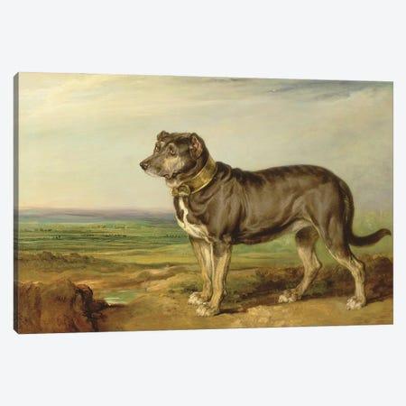Portrait Of `Vic', A Spanish Bloodhound, C.1818-20 Canvas Print #BMN11138} by James Ward Canvas Artwork