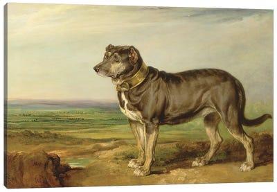 Portrait Of `Vic', A Spanish Bloodhound, C.1818-20 Canvas Art Print