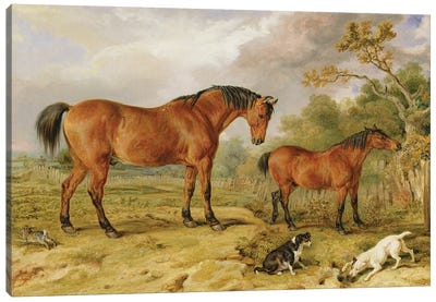 Portrait Of Reformer, Blucher, Tory And Crib, The Property Of Rowland Alston, Esq., 1835 Canvas Art Print