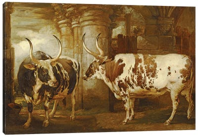 Portraits Of Two Extraordinary Oxen, The Property Of The Earl Of Powis, 1814 Canvas Art Print