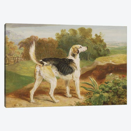 Ravager, One Of The Lambton Hounds Canvas Print #BMN11144} by James Ward Canvas Artwork