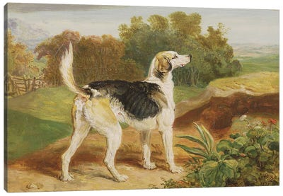 Ravager, One Of The Lambton Hounds Canvas Art Print