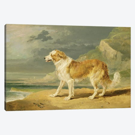 Rough-Coated Collie, 1809 Canvas Print #BMN11145} by James Ward Canvas Artwork
