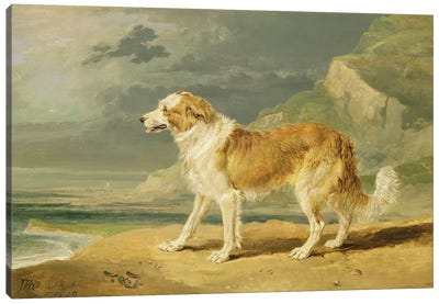 Rough-Coated Collie, 1809 Canvas Art Print