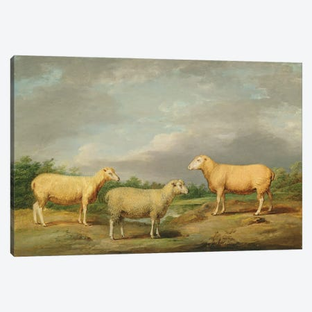 Ryelands Sheep, The King's Ram, The King's Ewe And Lord Somerville's Wether, C.1801-07 Canvas Print #BMN11146} by James Ward Canvas Wall Art