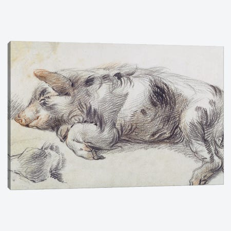 Sleeping Pig Canvas Print #BMN11154} by James Ward Canvas Art Print