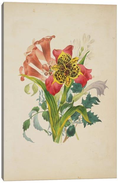 Bouquet Of Trumpet Vine (Illustration From Flora's Dictionary), 1838 Canvas Art Print