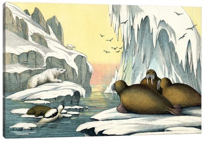 Animals Of The Arctic Regions, 1860 Canvas Art Print