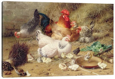 Hens Roosting With Their Chickens Canvas Art Print