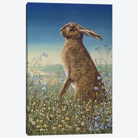 Hare, 1984 Canvas Print #BMN11384} by Frances Broomfield Canvas Art