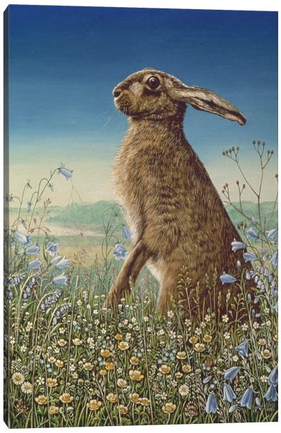 Hare, 1984 Canvas Art Print
