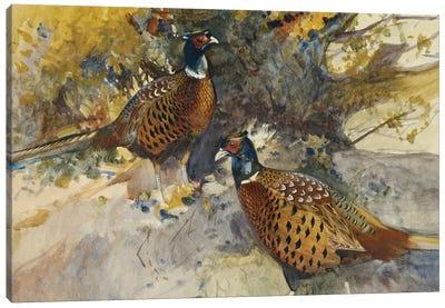 Cock Pheasants Under A Beech Tree Canvas Art Print