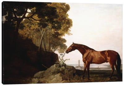 A Bay Arab In A Coastal Landscape, 1779 Canvas Art Print