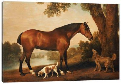 A Bay Hunter, A Springer Spaniel And A Sussex Spaniel, 1782 Canvas Art Print