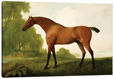 A Bay Thoroughbred In A Landscape, 1801 Canvas Art Print