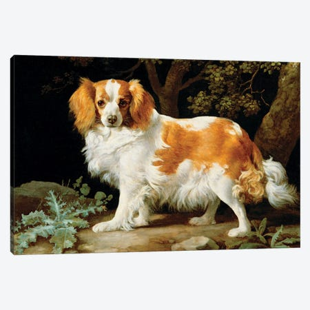 A Liver And White King Charles Spaniel In A Wooded Landscape, 1776 Canvas Print #BMN11558} by George Stubbs Canvas Wall Art