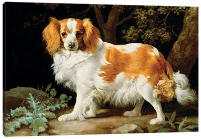 A Liver And White King Charles Spaniel In A Wooded Landscape, 1776 Canvas Art Print